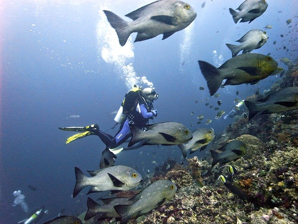 Une formation de plongée en open water Bali