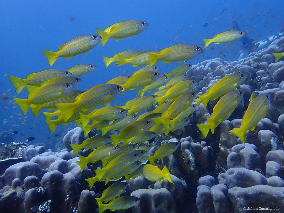 À la découverte du site de plongée Nusa Penida