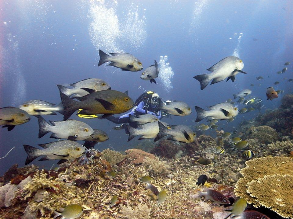 Meilleures plongées à Bali – Tulamben Plongée