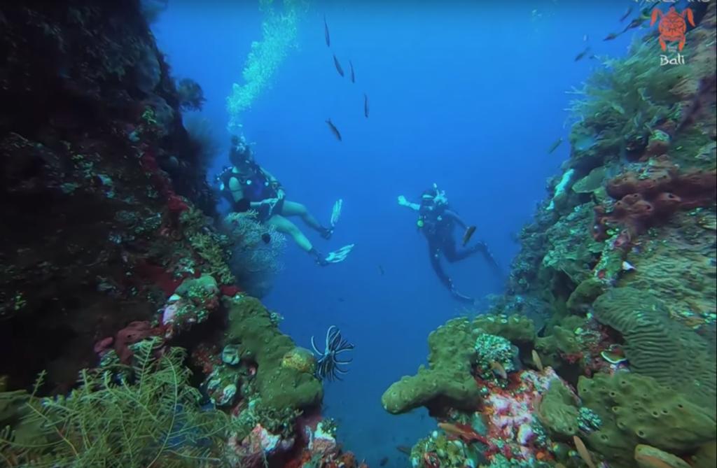 Que faire sur le site de plongée de Bali Plongée Épave