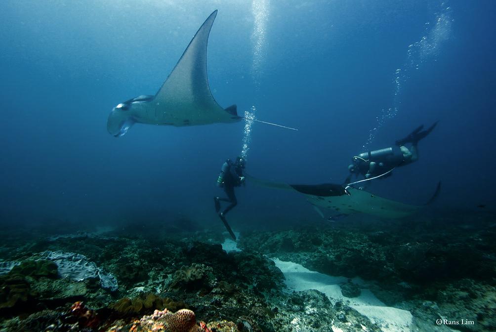 Plongée Nusa Penida : vivez une expérience unique !