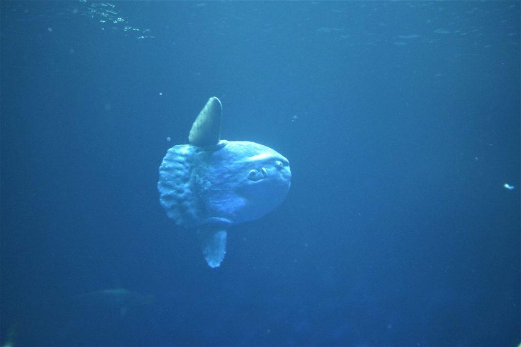 Plongées à Bali : Nusa Penida, Manta et Mola Mola Bali