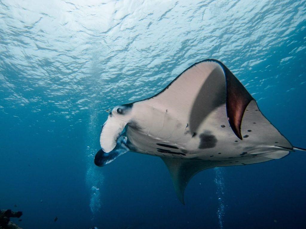 Combien dépenser pour une expérience de plongée à Nusa Penida?