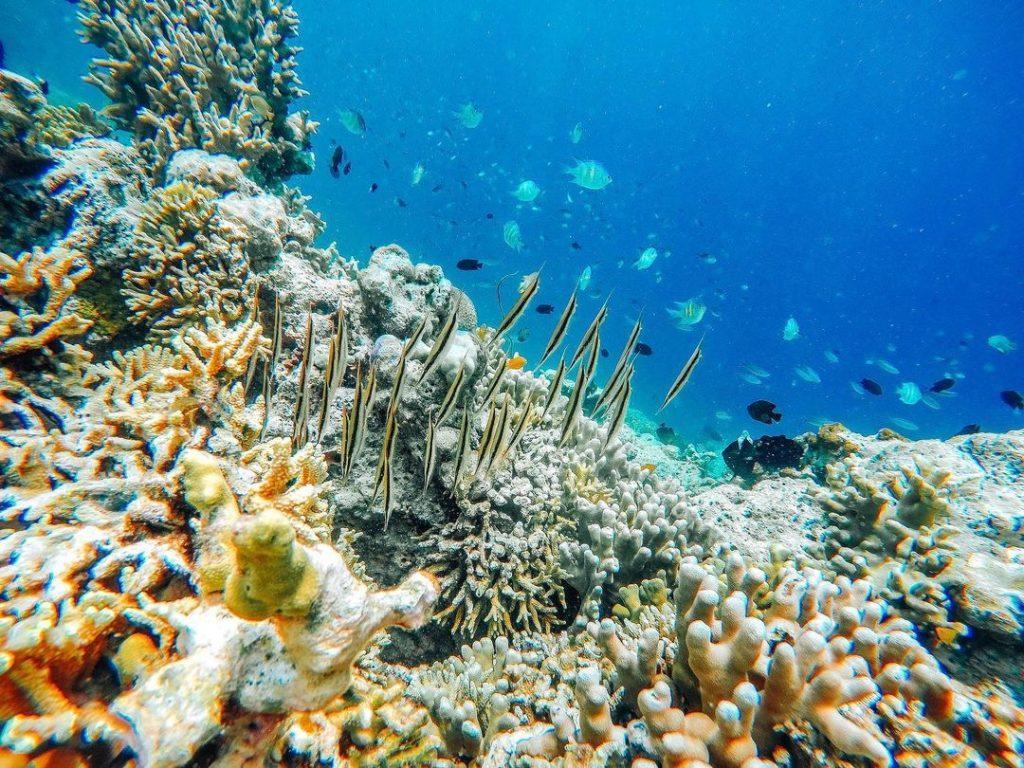 Menjangan, sites de plongée du parc national de l'ouest à Bali